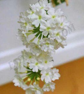 شاهپسند یکساله سفید (1)