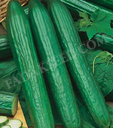 بذر خیار قلمی (3)
